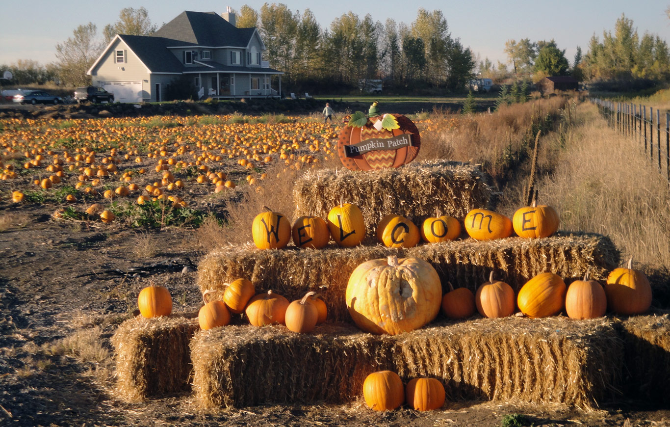 RC Pumpkin Patch north of Rexburg